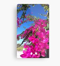 Bougainvillea - triple flower Metal Print