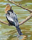 Anhinga Perched by Phyllis Beiser