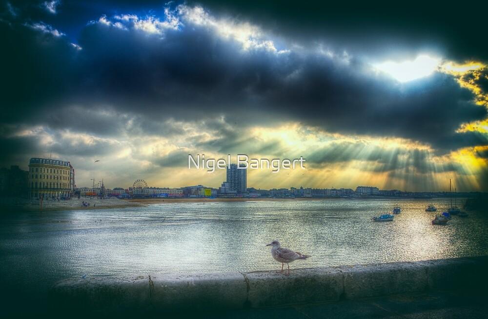 Margate Harbour Gull by Nigel Bangert