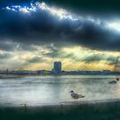 Margate Harbour Gull by Nigel Bangert