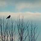 Crow On Tree Tops by gothicolors