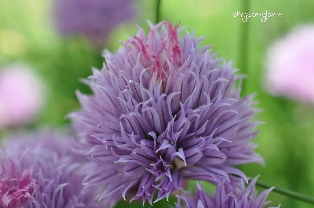 Onion Flowers by skysonglark