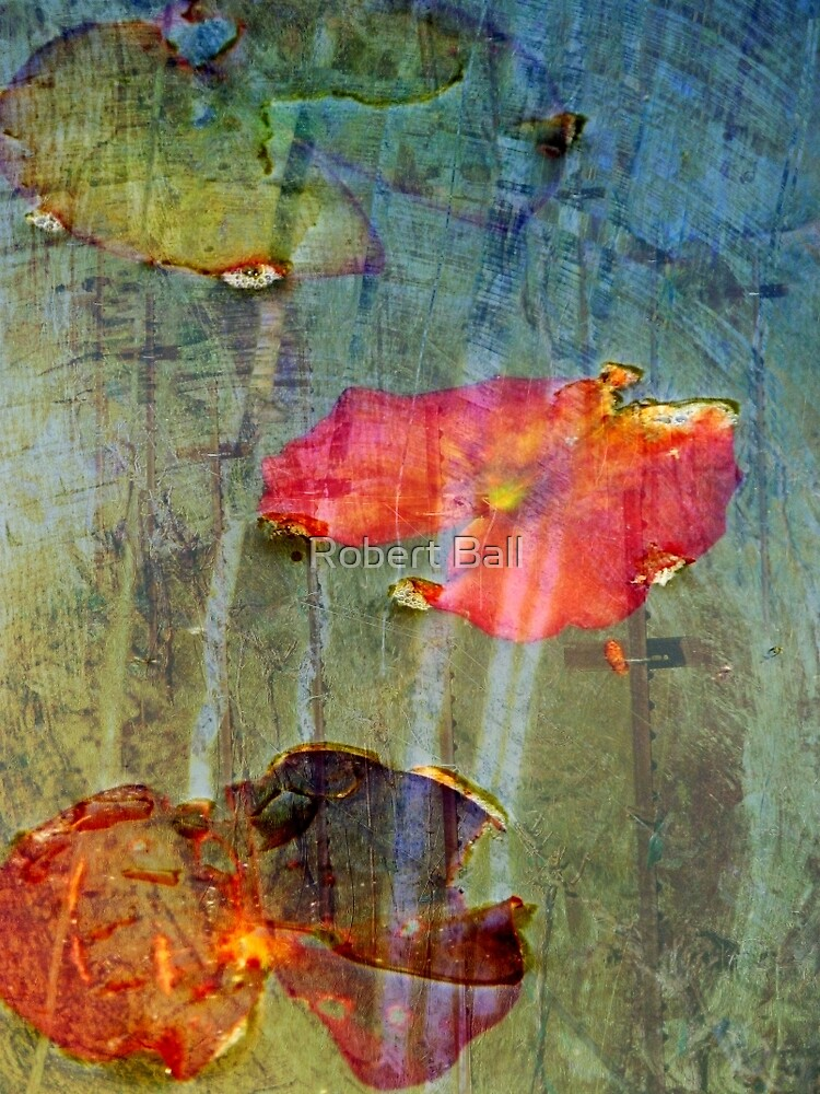 Lily Pad by Robert Ball