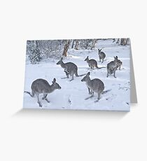 Eastern Grey kangaroos in snow, Snowy Mountains, Australia Greeting Card