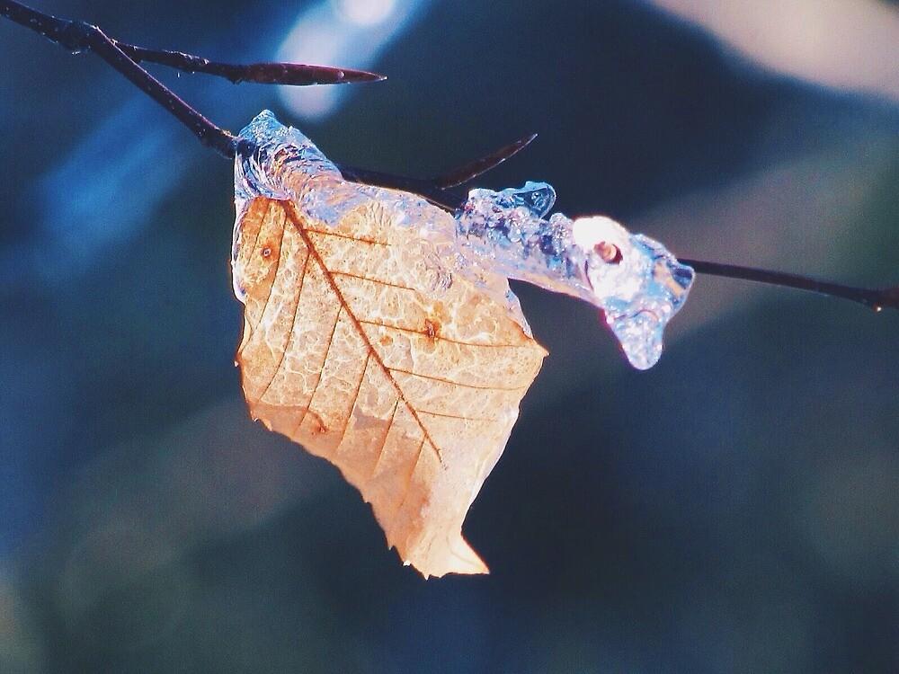 Frozen Leaf by asylumspirit