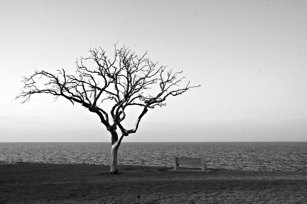 Lonely Tree by Lake Pontchartrain by HomeAndHut