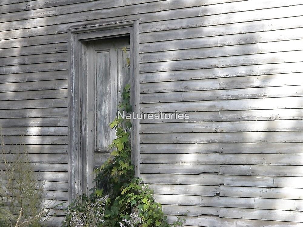Silent door by Naturestories