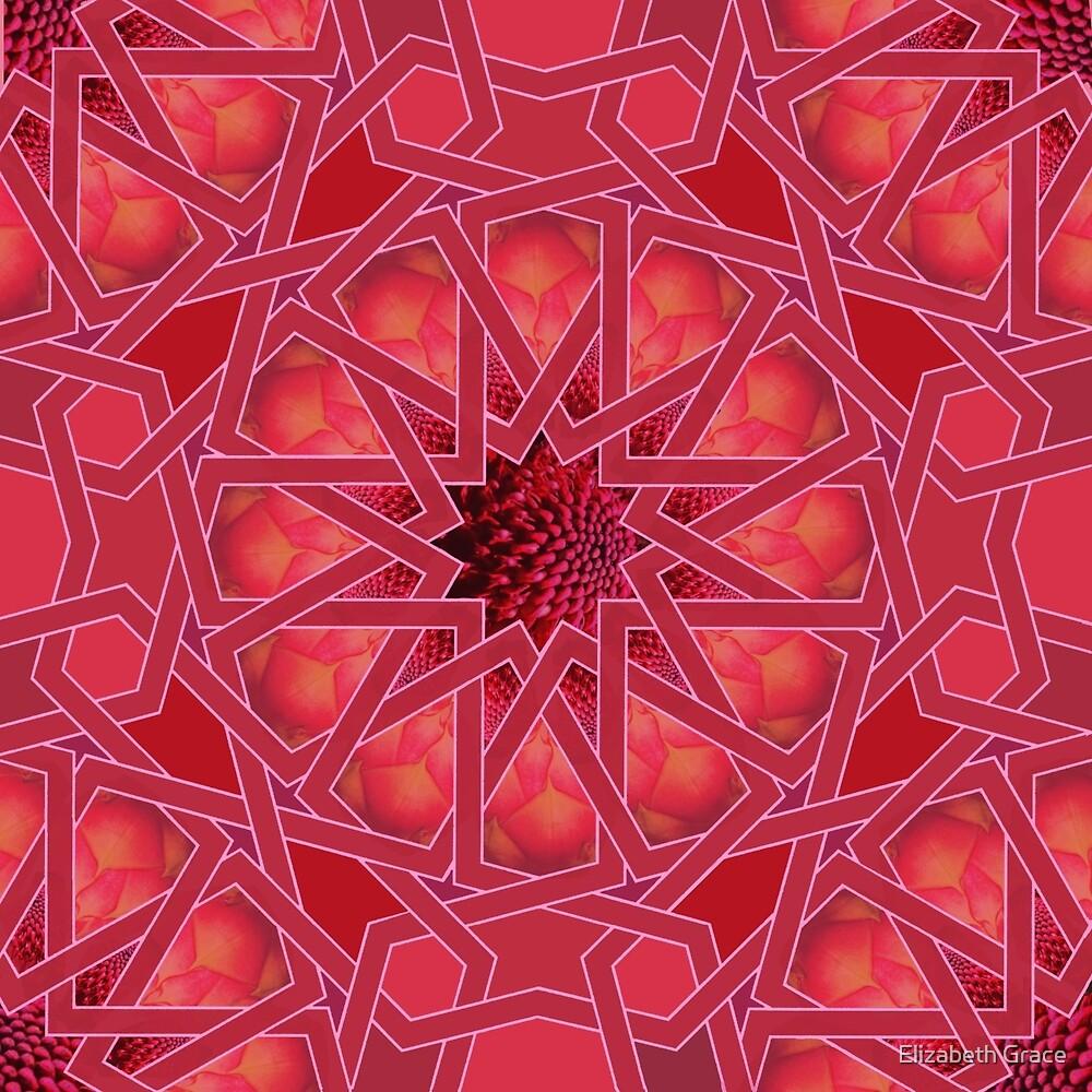 Waratah by Elizabeth Grace