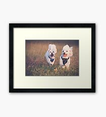 Puppy Fun Framed Print