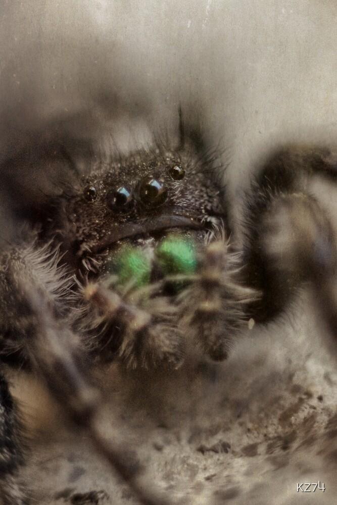 spider by KZ74
