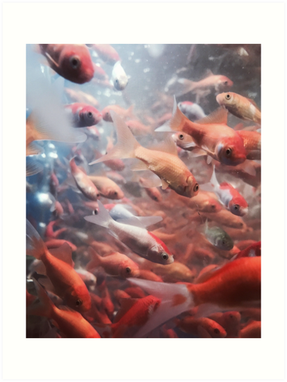 Goldfish, 2016 by Marc Zahakos