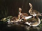 5 little ducks went out one day by Elisabeth Dubois