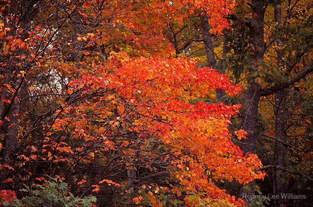 Autumn Flames by Rodney Lee Williams