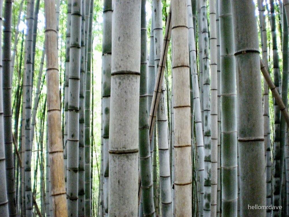 Bamboo by naturalish
