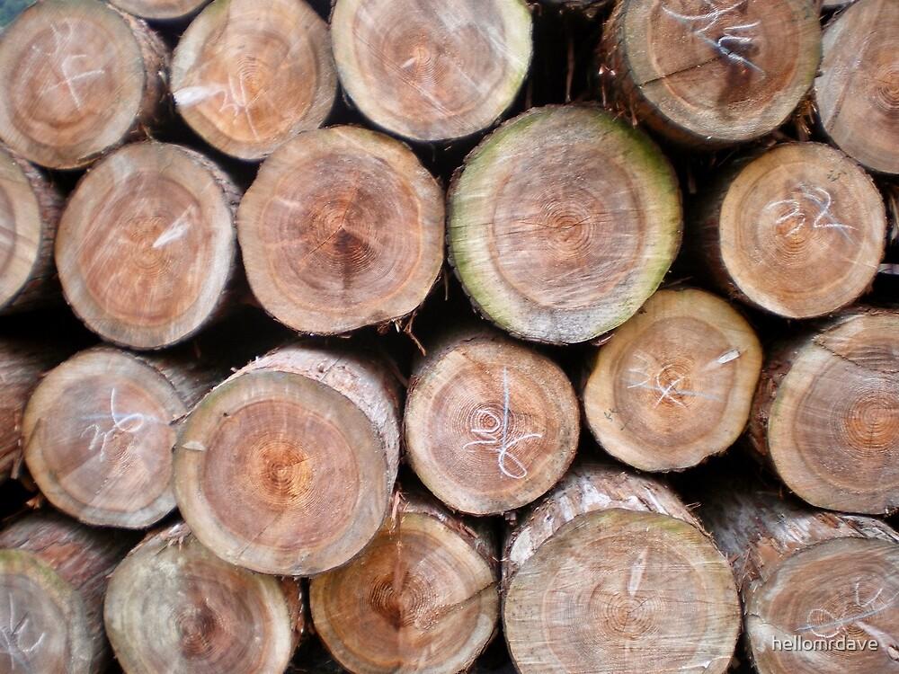 Logs #1 by naturalish