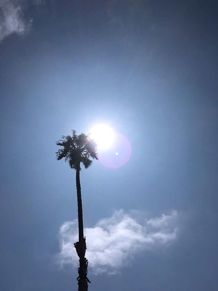 California Palm Tree in The Sun by BradsCaptures