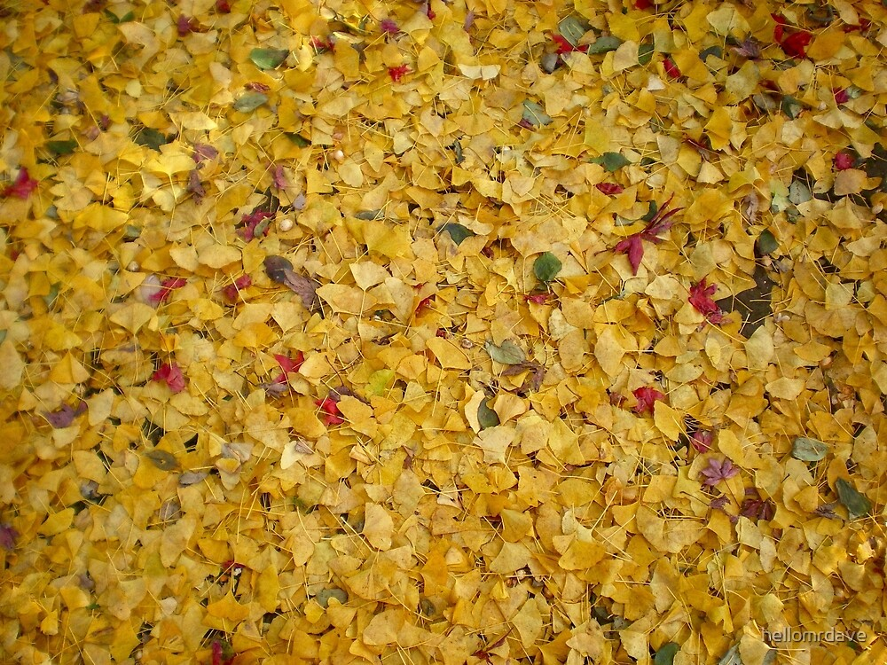 Yellow leaves by naturalish