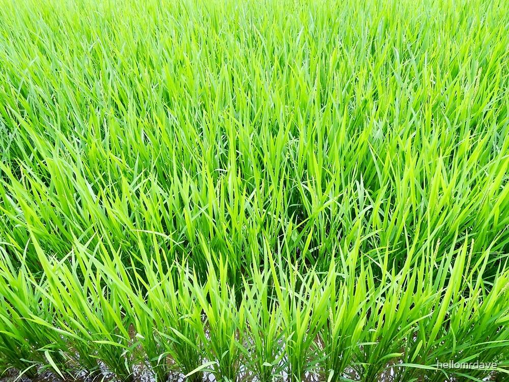 Rice field #2 by naturalish