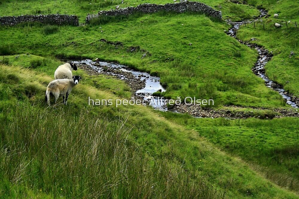 Two Sheep In The Yorkshire Dales by hans peðer alfreð olsen