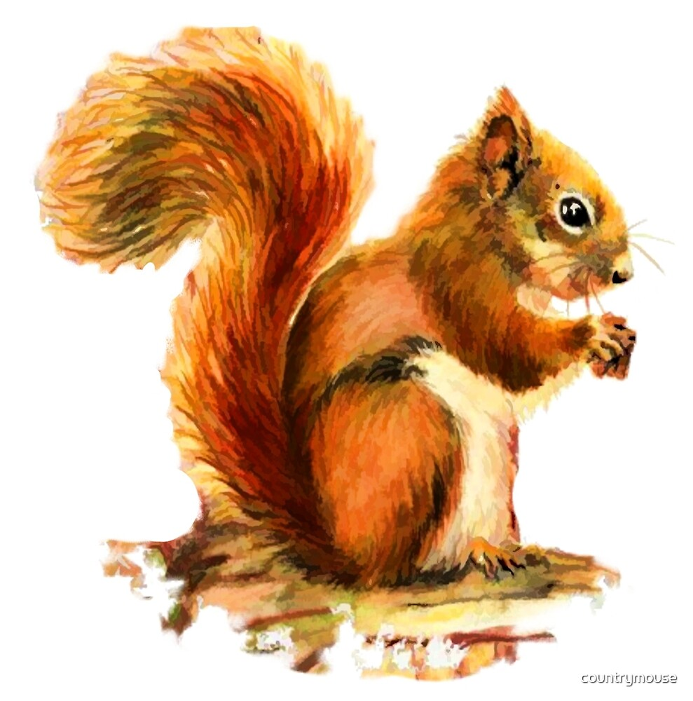 Watercolor Red Squirrel Animal  by countrymouse