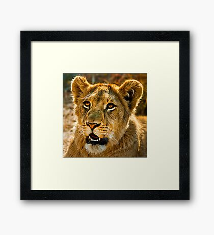 Eco-Tourism: A Once in a Lifetime Experience Framed Print