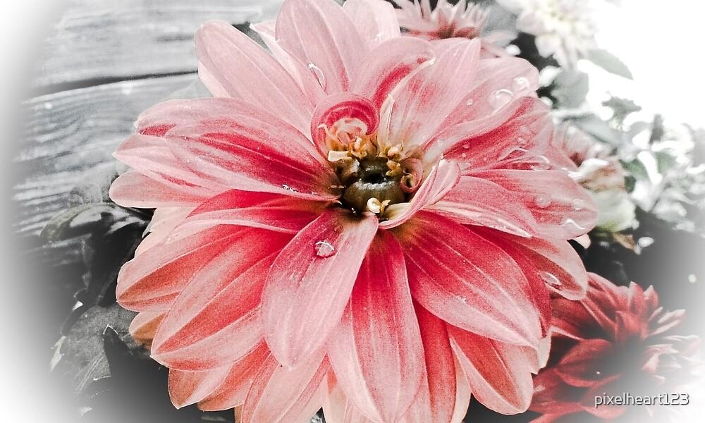 Pink blossom by pixelheart123