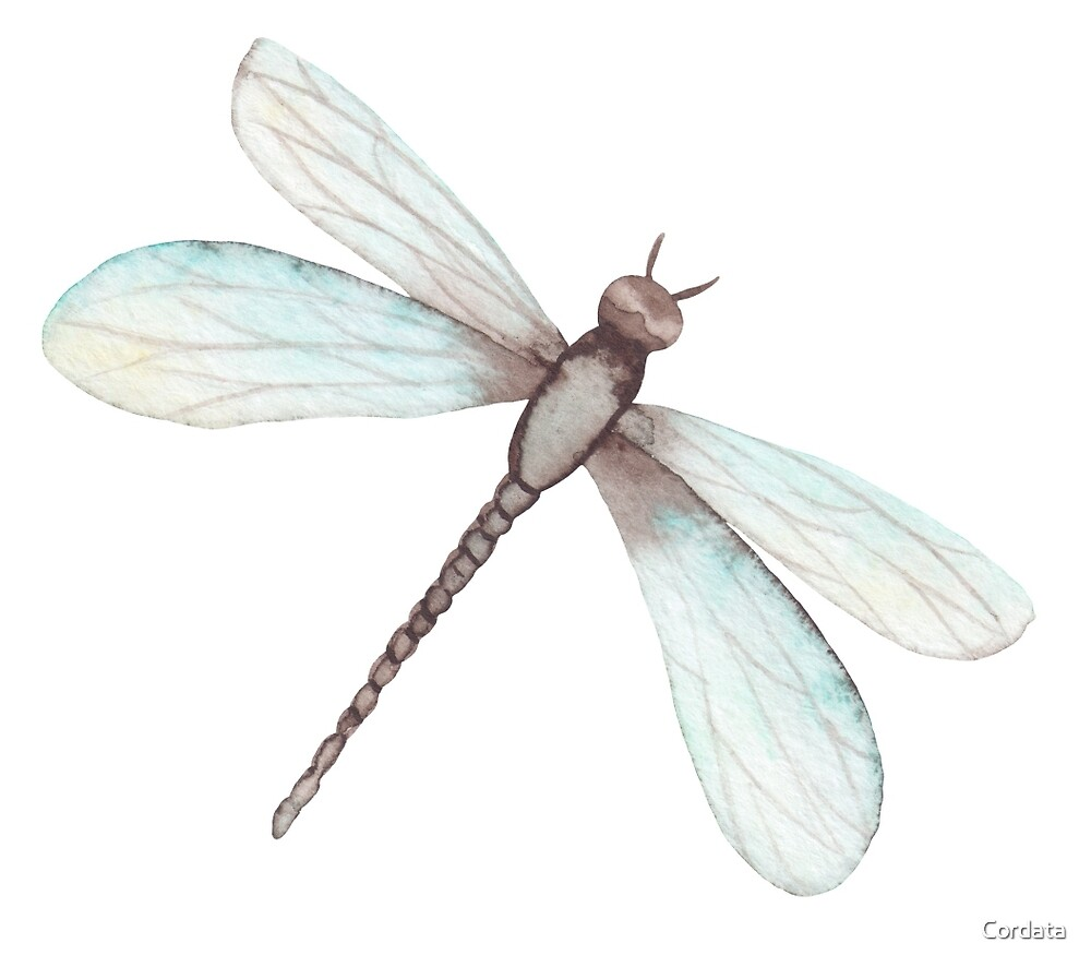 Watercolor Dragonfly by Cordata