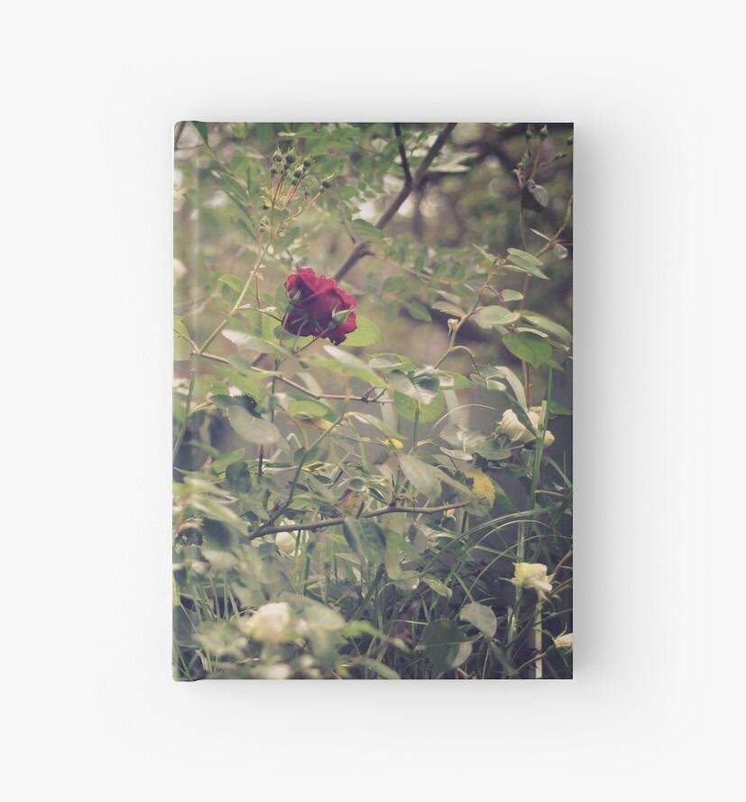 single red rose  by RhiannonHenkel