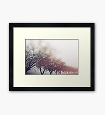 Winter trees Framed Print