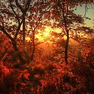 Autumn Glory by Ursula Rodgers
