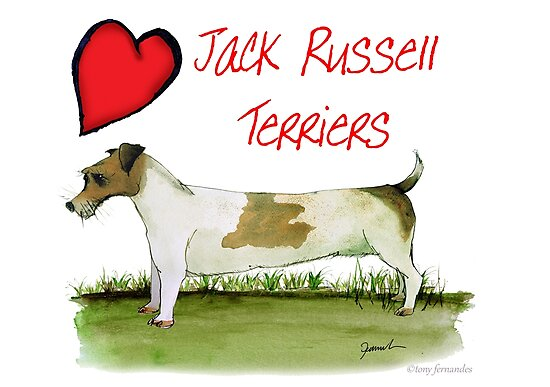 i love jack russell terriers - tony fernandes by Tony Fernandes