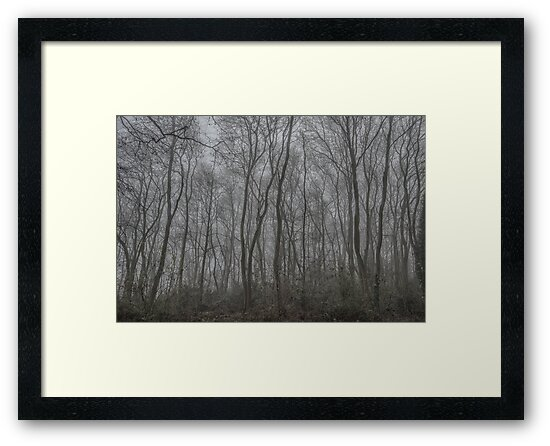 Trees in the fog by Guy  Berresford