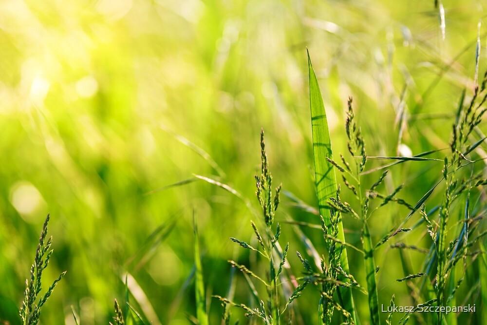 Green grass meadow with a touch of yellow sunbeams by Lukasz Szczepanski