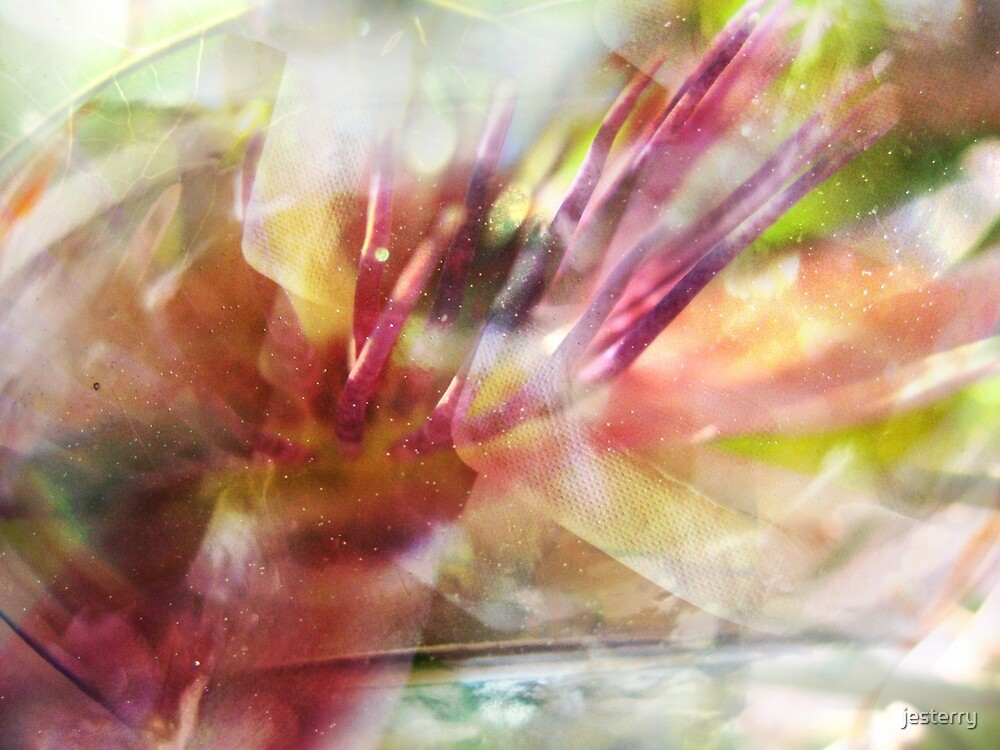 wonder/dancer by jesterry