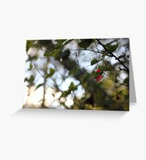 A wild redcurrant growing in the forest Greeting Card