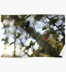 A wild redcurrant growing in the forest Poster