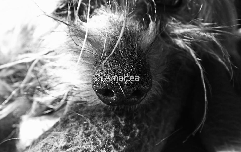 Dog snout by Amaltea