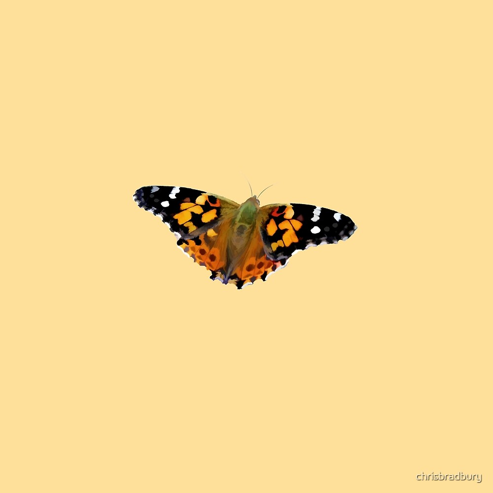Painted Lady Butterfly (2) by chrisbradbury