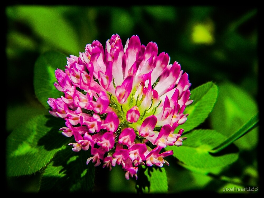 Bright Blossom by pixelheart123