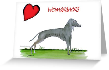 i love weimaraners - tony fernandes by Tony Fernandes