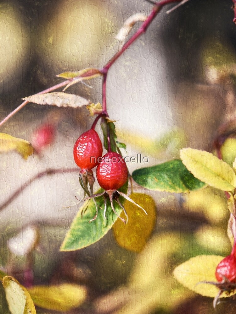 Rose Hips by neoexcello