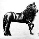 Fresian Stallion by Jan Szymczuk