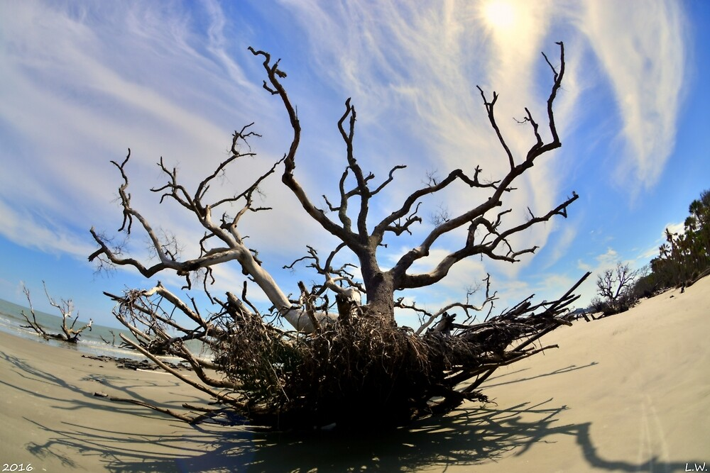 Driftwood And Roots Hunting Island SC by LisaWootenPhoto