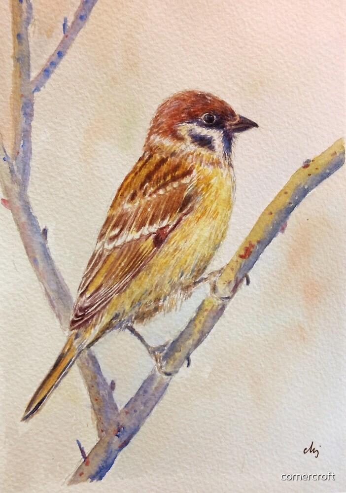 Watercolor Sparrow illustration by cornercroft