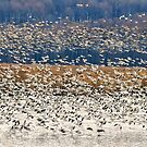 Snow Geese At Willow Point by Lois  Bryan