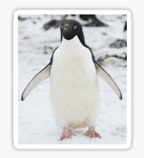 An Adelie penguin, from Antartica Sticker