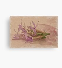 Mauve Ribboned Stars Canvas Print