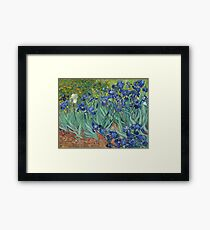 Irises by Vincent van Gogh Framed Print