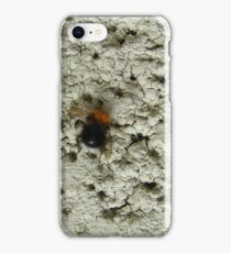 Bumble Bee on a Wall iPhone Case/Skin