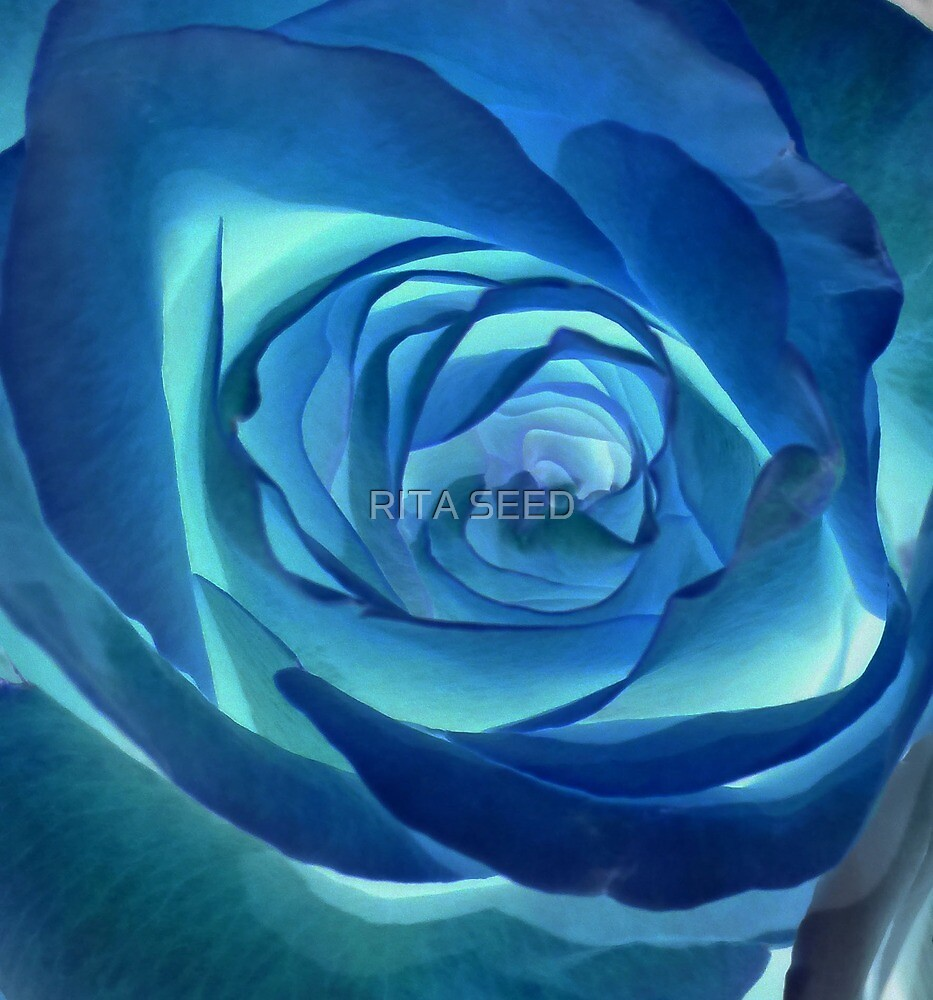 Rose in Blue by RITA SEED